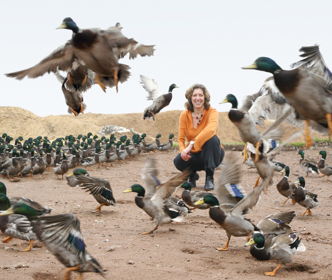 ariane with mallards