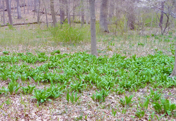 ramps in the field