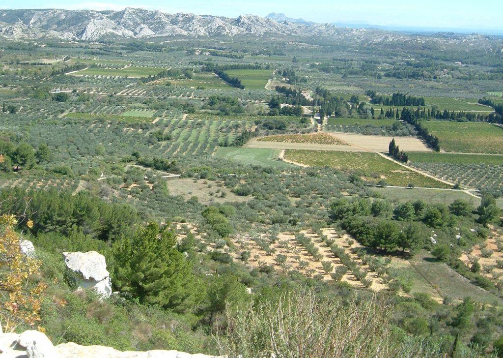 Maussane les Alpilles View