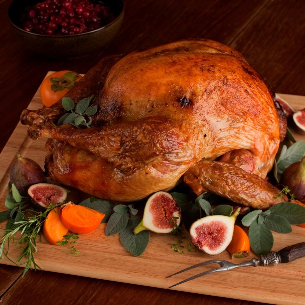turkey_1468