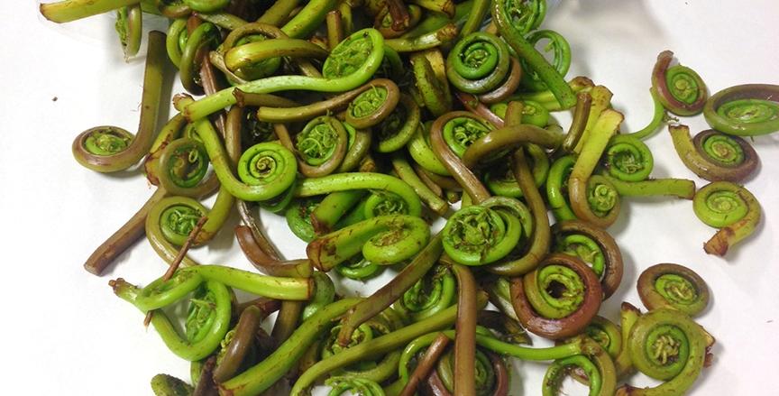 fiddlehead ferns.jpg