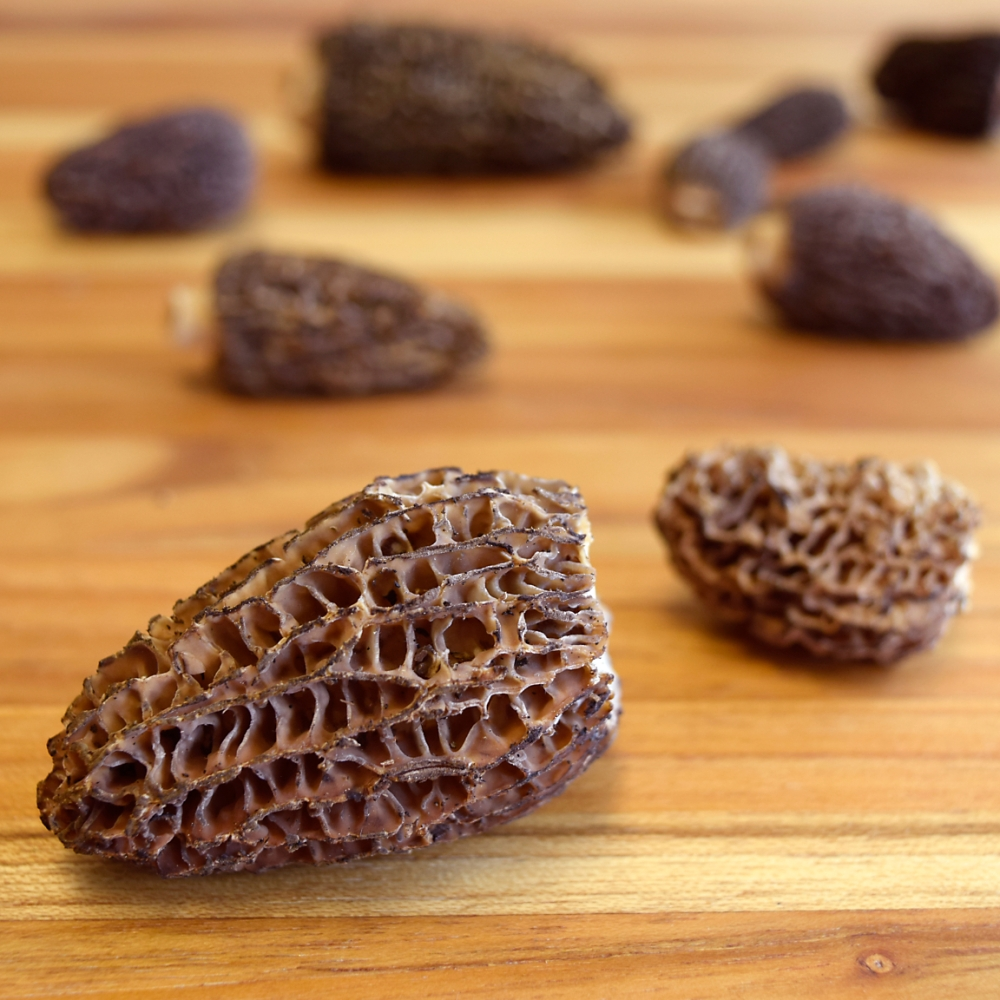 morel-mushroom-closeup